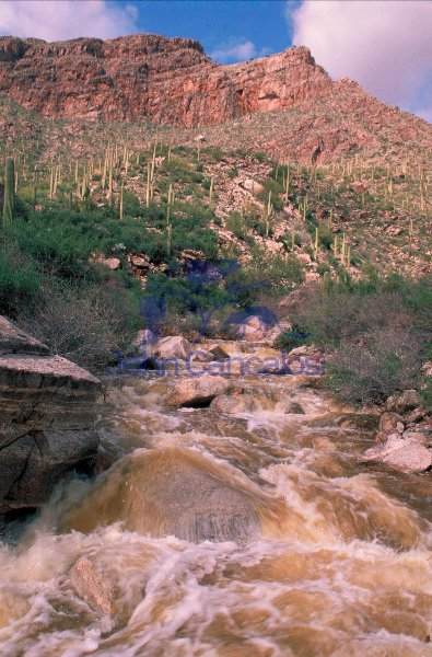 Desert wash in flood near Tucson, Arizona
