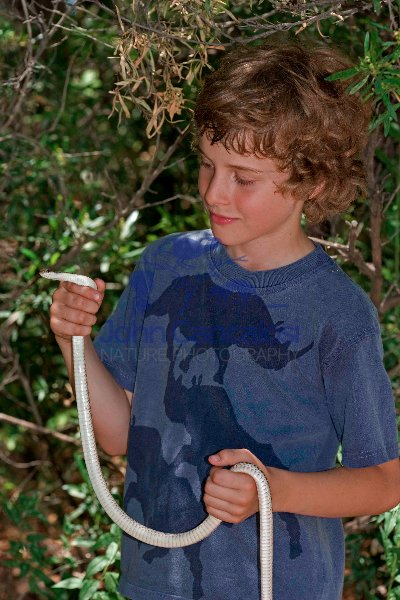 Boy Holding Patch-nosed Snake (Salvadora hexalepis) -Arizona