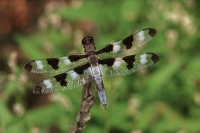 Dragonfly - secies unknown - Oregon - USA