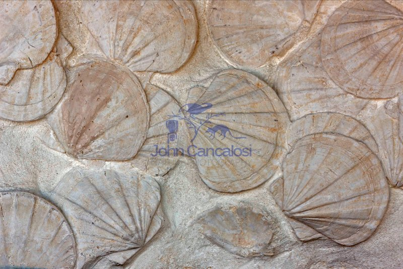Fossil Scallops  - France