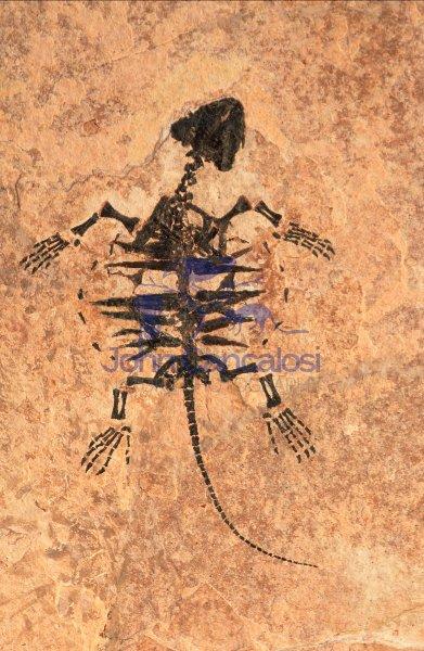fossilturtledust