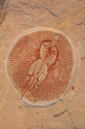 Fossil Ray - Cyclobatis minor - Cretaceous - Lebanon