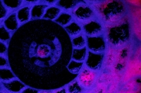 Fossil Ammonite  - Under UV light