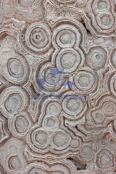 Fossil Stromatolites Morocco  Cretaceous