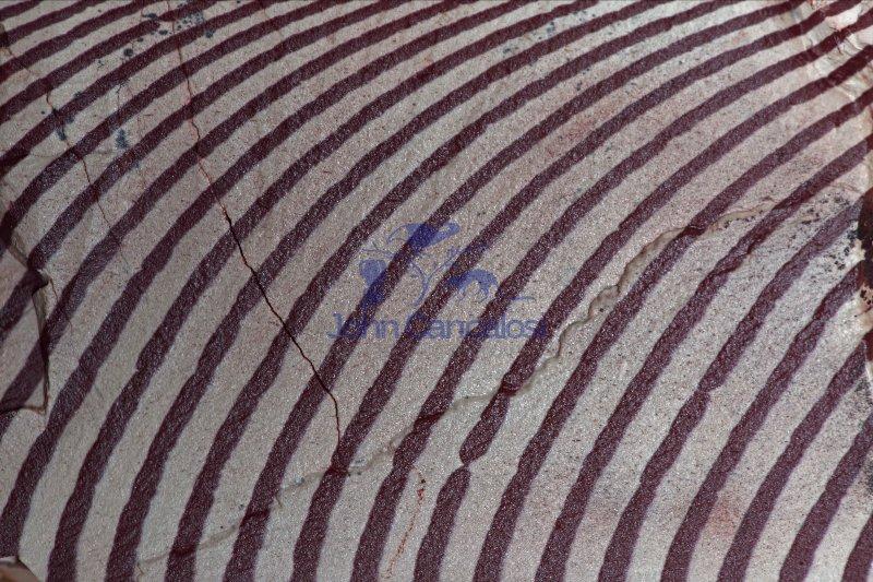 Zebra Stone - Western Australia