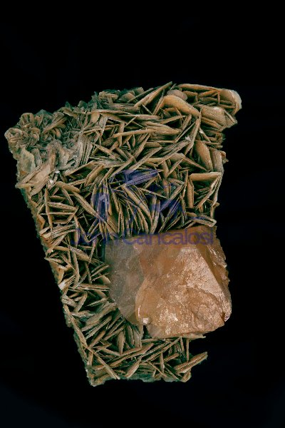 Scheelite Crystal (CaWO4) on Muscovite - China