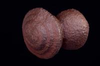"""Moqui marbles"" - Hematite concretions -  southeast Utah"