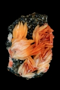 Barite (BaS04) on Cerrusite  - Mibladen  Morocco