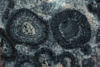 Orbicular Granite - Mt. Magnet - Western Australia