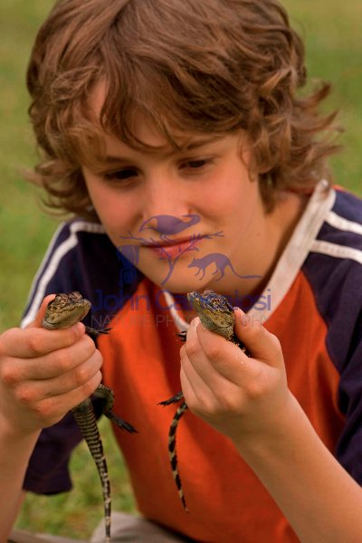 Boy Holding Young American Alligators (Alligator mississippiensi