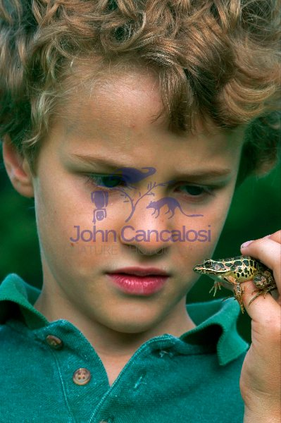 Boy with pickerel frog-Pennsylvania