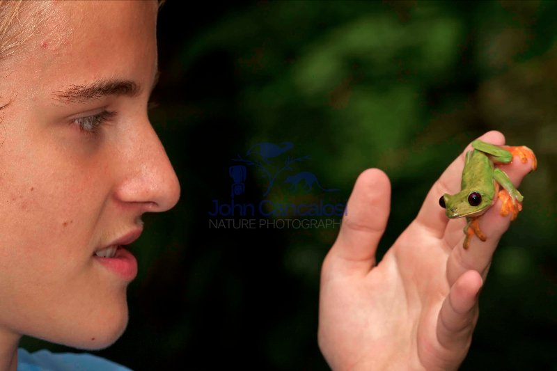 Boy with Gliding leaf frog- Agalychnis spurrelli  - Costa Rica
