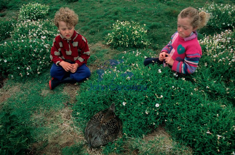 Children being shown a Lesser Black-backed Gull Chick - Scottlan