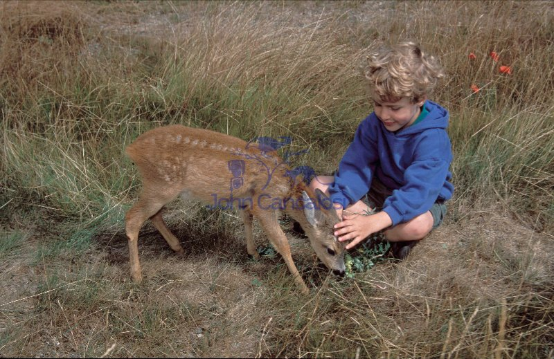 Child  and Roe deer fawn -  Spain