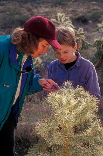 Woman and Child Looking at Cholla Cactus - Arizona