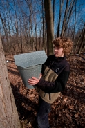 Boy Collecting Sap to Make Maple Syrup - Ithaca NY - USA