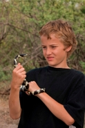 Boy holding Common Kingsnake (Lampropeltis getulus)-Arizona