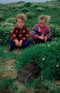Children Looking at Eider Nest - Scottland