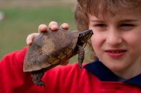 Boy holding Eastern Box Turtle (Terrapene carolina carolina) - M