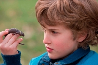 Boy and Spotted Salamander (Ambystoma maculatum) - NewYork