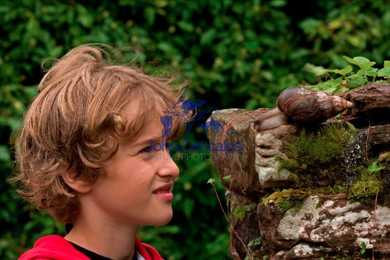 Boy Observing Giant African Land Snail - Captive - England - UK
