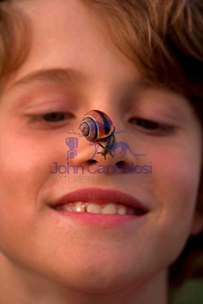 Boy with Brown-lipped Snail on Nose  - England - UK