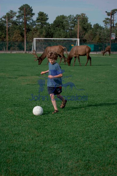 Child on Soccer Field with Elk in Background - Arizona-USA