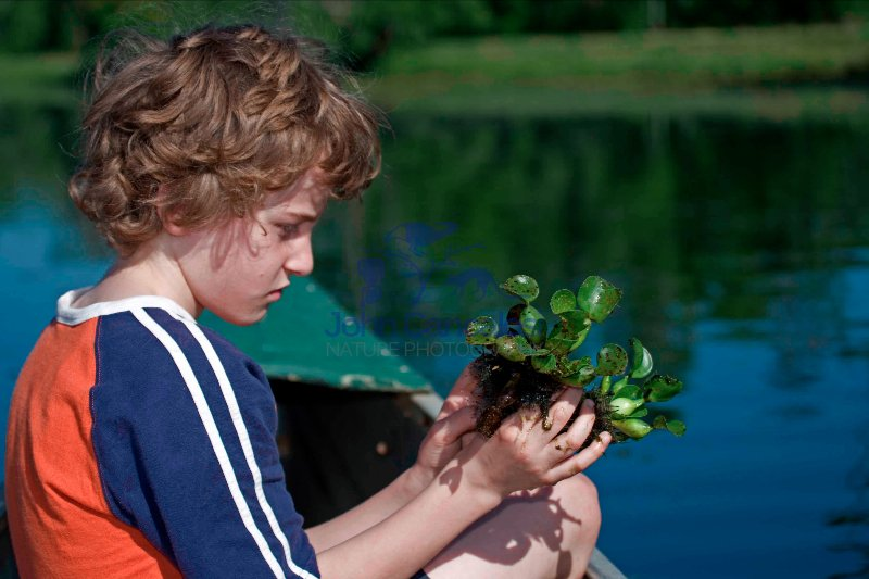 Boy Observing Water Hyacinth in Louisiana Swamp - USA