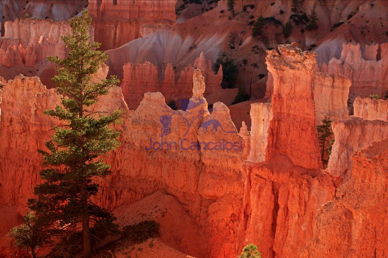 Bryce Canyon National Park - Utah -
