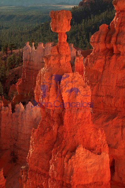 Bryce Canyon National Park - Utah - Thor\'s hammer