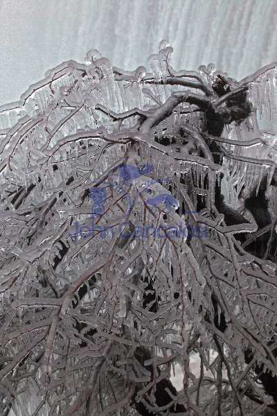 Ice-covered Tree near Horseshow Falls - Niagara Falls - Canada