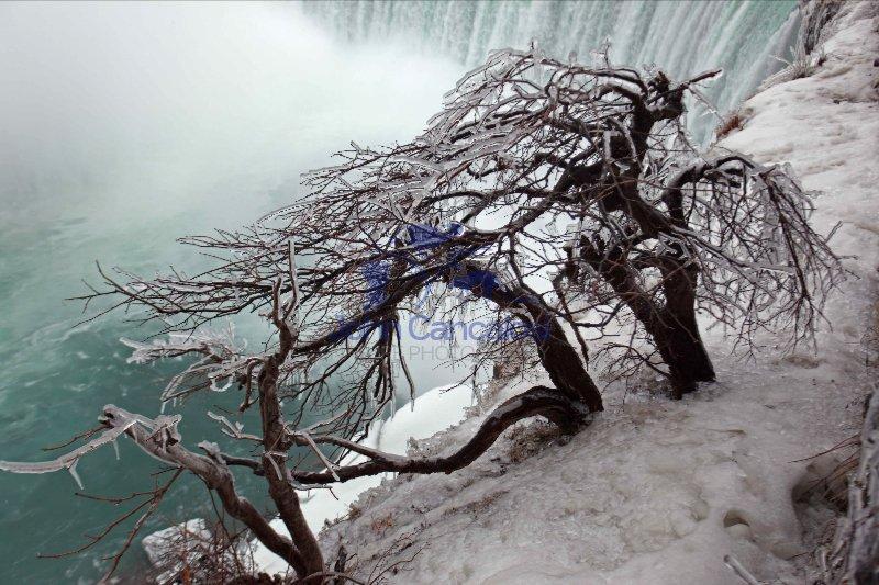 Frozen Trees Overlooing Niagara Falls - Canada