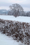 Winter scene - Herefordshire - England UK