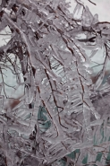 Ice-covered Branches - New York USA