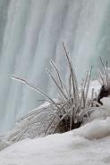 Frozen Bushes Near Horseshoe Falls - Niagara Falls - Canada