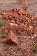 Petrified trees - Araucarioxylon arizonicum -  Petrified forest