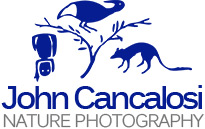 John Cancalosi Photography - Nature Photography